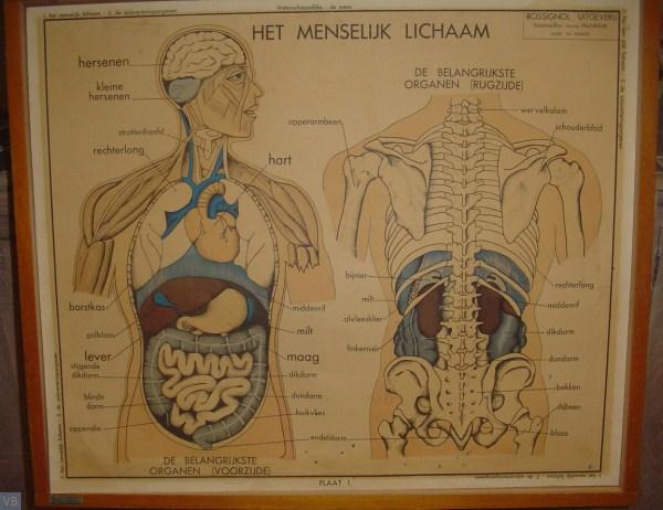 1 - het menselijk lichaam